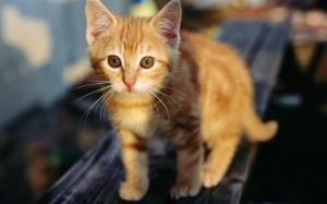 รูปแมวน่ารักๆ-7